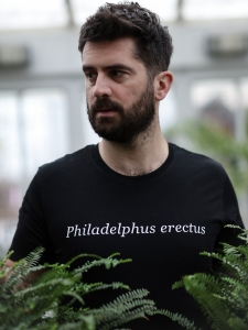 Philadelphus erectus